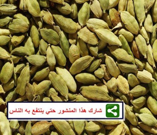 """صورة 6 فوائد صحية لـ""""الحبهان"""" منها تنظيم السكر والوقاية من الفشل الكلوي والقلب"""