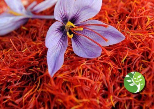 Photo of el azafrán se puede usar como un tratamiento alternativo contra el cáncer
