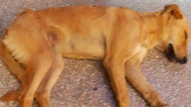 صورة بدر عياد يكتب: مرض الكلب يكشف إنسانية مهاب وحقارة البواب